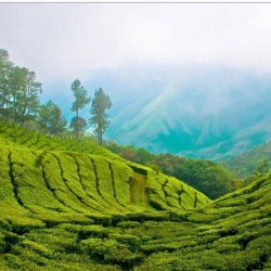 How about waking up in the tea fields of India... How about waking up in the tea fields of India